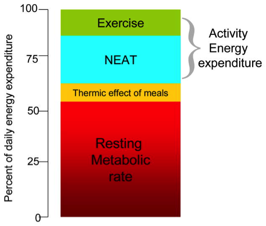 NEAT; a new strategy to increase energy expenditure – Nutritionist 4 u